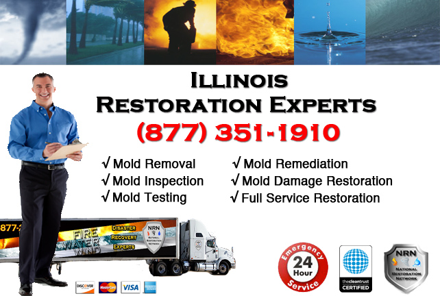 Illinois Mold Cleanup