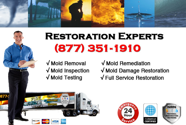 Mold Removal & Cleanup Company