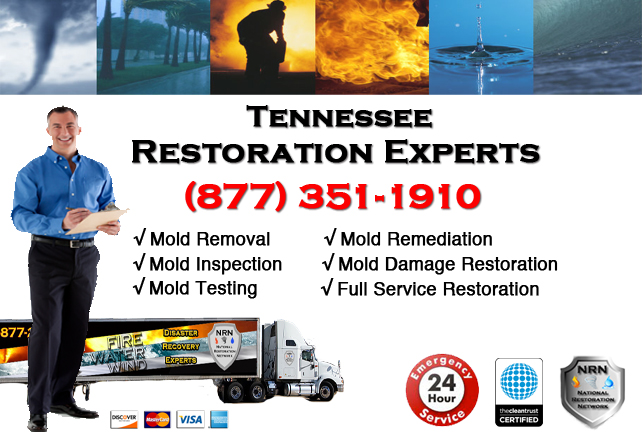 Mold Removal Tennessee