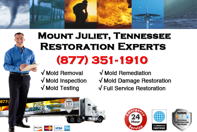 Mount Juliet Mold Remediation & Cleanup