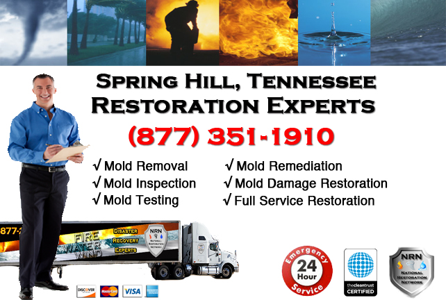 Spring Hill Mold Remediation & Cleanup