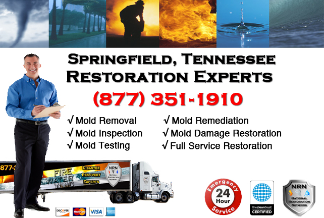 Springfield Mold Remediation & Cleanup
