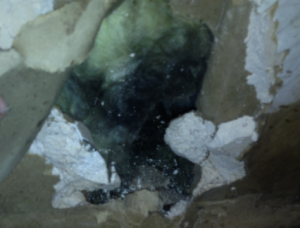 picture of black mold invading home