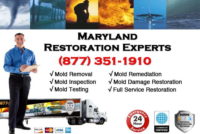 Maryland Mold Remediation