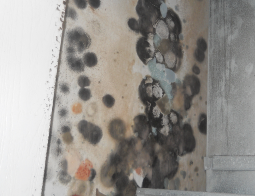 black mold in homeowners basement