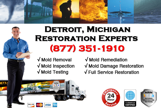 Detroit Mold Removal Services