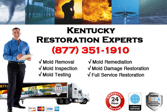 Kentucky Mold Removal Services