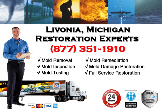 Livonia Mold Removal Services