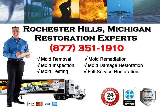 Rochester Hills Mold Removal Services