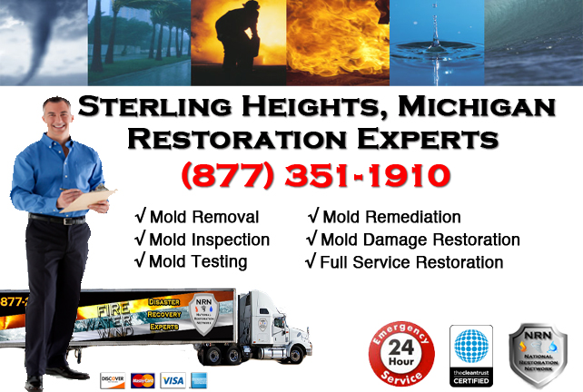 Sterling Heights Mold Removal Services
