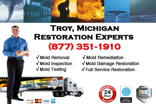 Troy Mold Removal Services