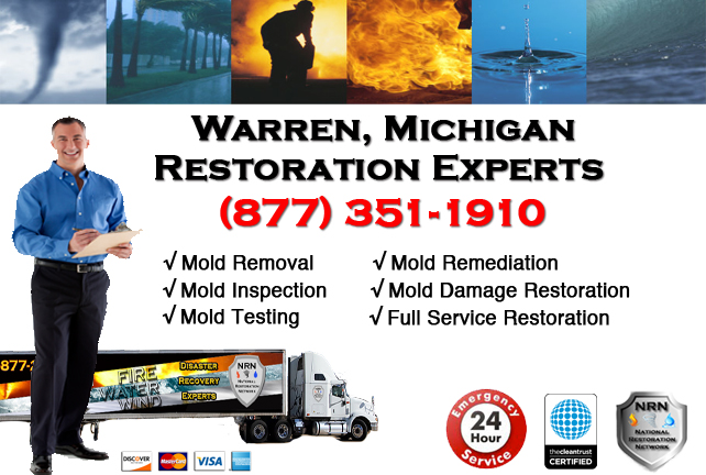 Warren Mold Removal Services