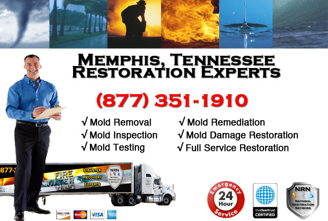 Memphis Mold Remediation