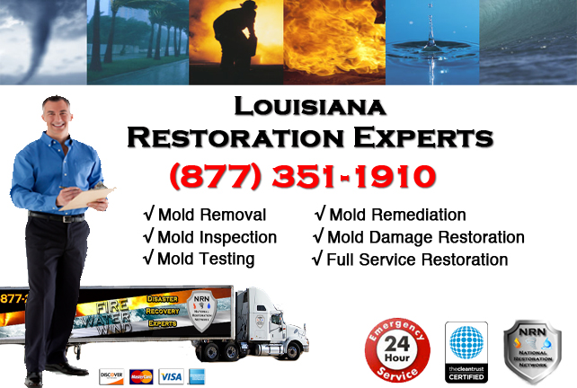 Louisiana Mold Remediation