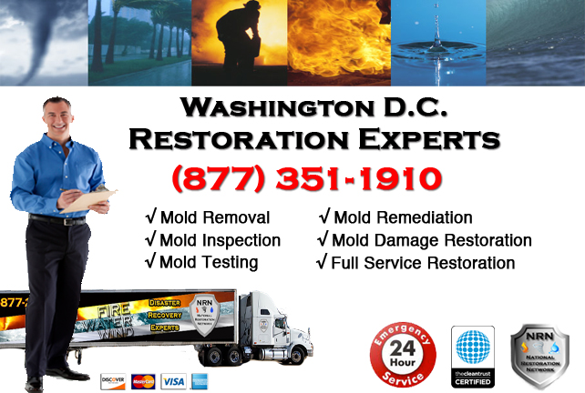 Washington DC Mold Remediation