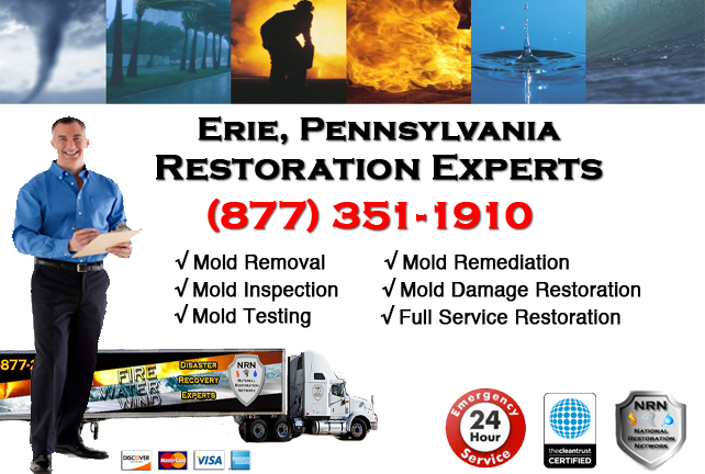 Erie Mold Remediation