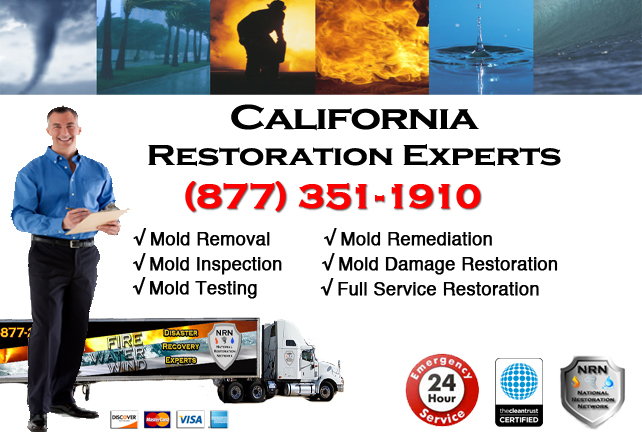 California Mold Removal & Cleanup
